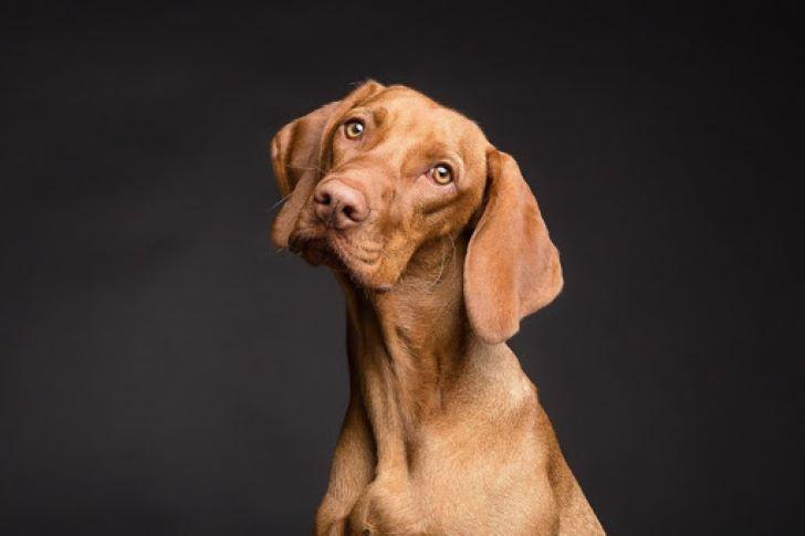 Hondenpaspoort