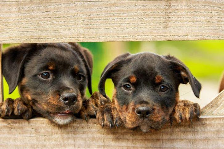 Registratie van hondenfokkers