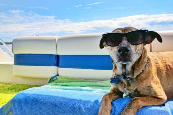 Op vakantie mét of zonder jouw huisdier